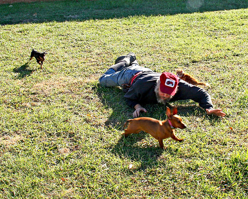 The dogs enjoyed it even more when Galen joined us in the side yard! Gotta love playing with