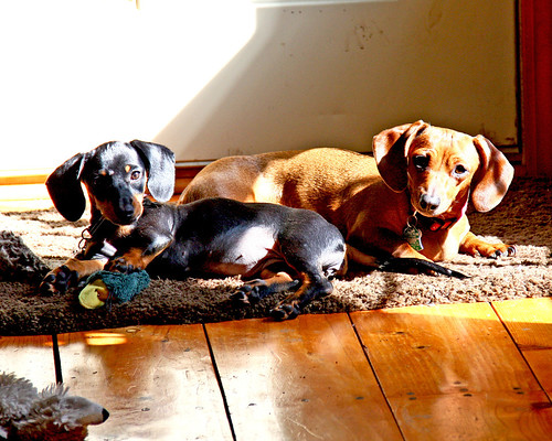 Our two cutie's!  They were laying in the sun by the front door and I had to snap their photo...the shadows kinda makes it hard to see everything good but they still look cute!
